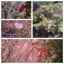 The desert has her way with beauty!