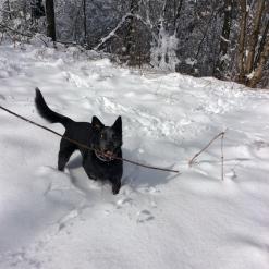 Snow stick!