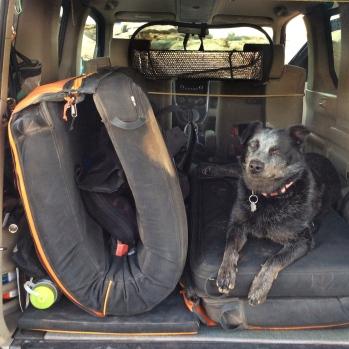 The trusty Lola-mutt is always ready.